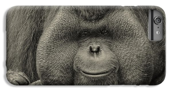Bornean Orangutan II IPhone 6 Plus Case by Lourry Legarde
