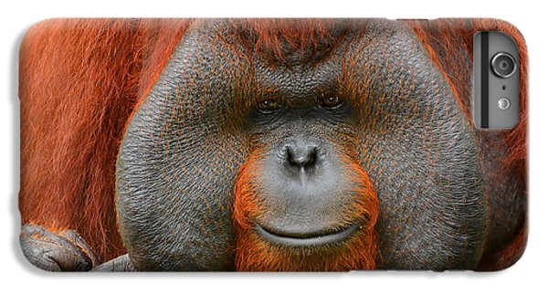Bornean Orangutan IPhone 6 Plus Case by Lourry Legarde