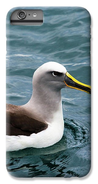 Buller's Albatross (thalassarche Bulleri IPhone 6 Plus Case by Micah Wright