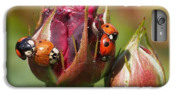 Busy Ladybugs IPhone 6 Plus Case