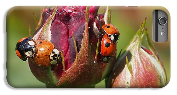 Busy Ladybugs IPhone 6 Plus Case