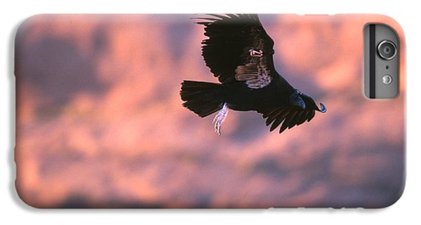 California Condor IPhone 6 Plus Case