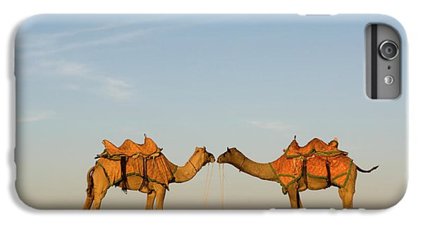 Camels Stand Face To Face In The Thar IPhone 6 Plus Case