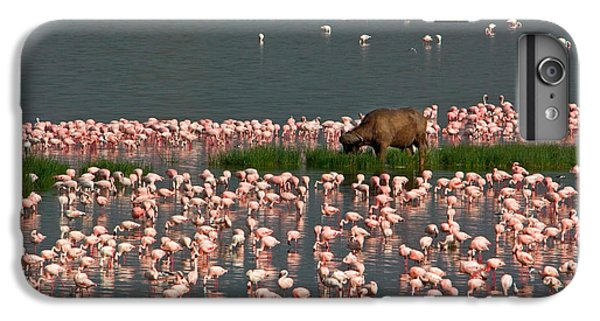 Cape Buffalo And Lesser Flamingos IPhone 6 Plus Case by Panoramic Images