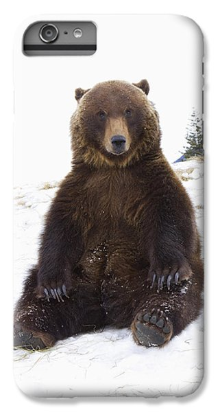 Captive Grizzly During Winter Sits IPhone 6 Plus Case by Doug Lindstrand