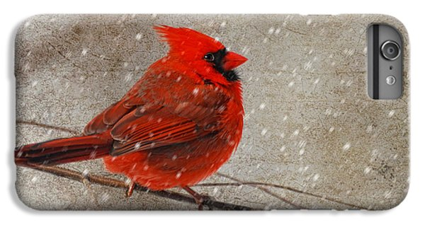 Cardinal In Snow IPhone 6 Plus Case