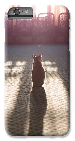 Cat Sitting Near Window IPhone 6 Plus Case by Matteo Colombo