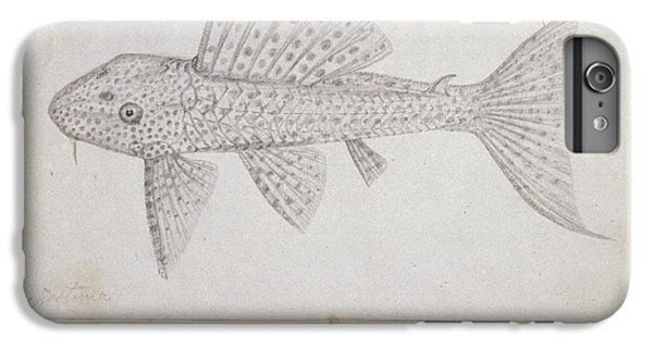 Catfish iPhone 6 Plus Case - Catfish by Natural History Museum, London
