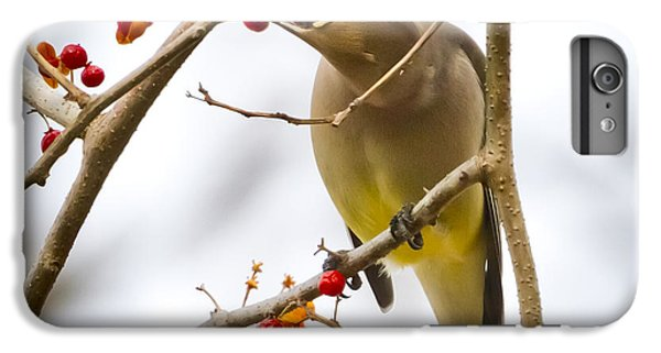 IPhone 6 Plus Case featuring the photograph Cedar Waxwing by Ricky L Jones