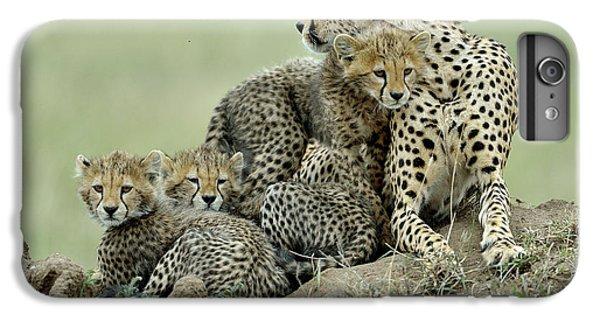 Africa iPhone 6 Plus Case - Cheetah by Giuseppe D\\\amico