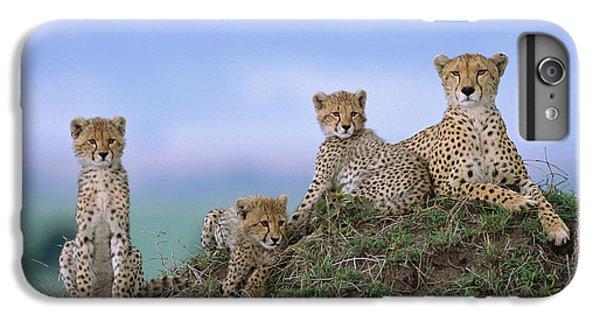 Cheetah Mother And Cubs Masai Mara IPhone 6 Plus Case by Yva Momatiuk John Eastcott