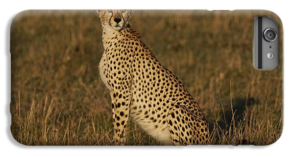 Cheetah On Savanna Masai Mara Kenya IPhone 6 Plus Case by Hiroya Minakuchi