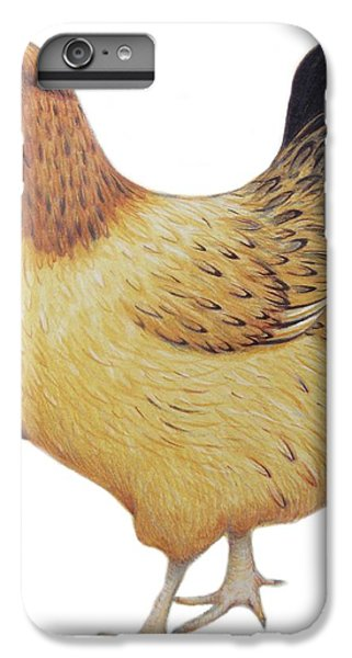 Chicken IPhone 6 Plus Case by Ele Grafton