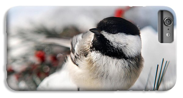 Chilly Chickadee IPhone 6 Plus Case by Christina Rollo