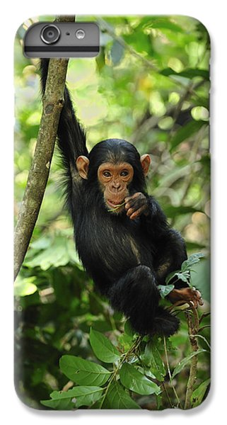 Chimpanzee Baby On Liana Gombe Stream IPhone 6 Plus Case by Thomas Marent