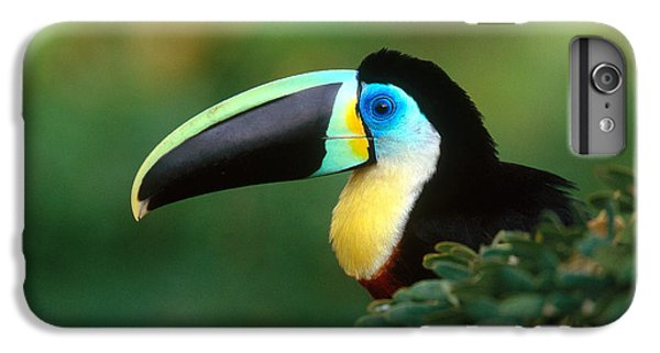 Citron-throated Toucan IPhone 6 Plus Case by Art Wolfe