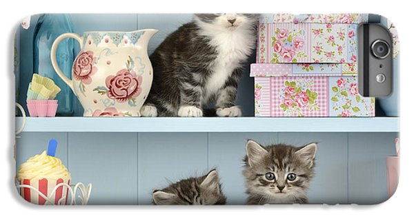 Baking Shelf Kittens IPhone 6 Plus Case by Greg Cuddiford