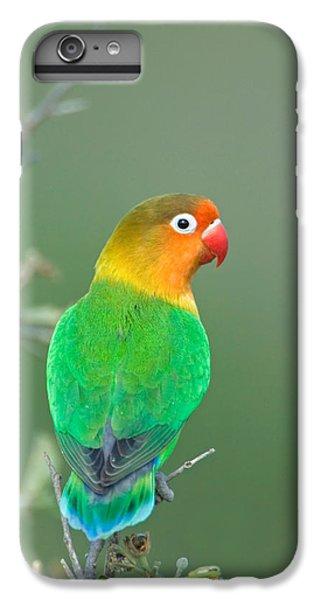Close-up Of A Fischers Lovebird IPhone 6 Plus Case