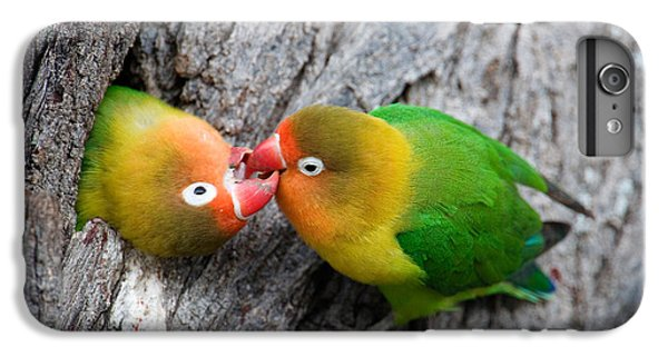 Lovebird iPhone 6 Plus Case - Close-up Of A Pair Of Lovebirds, Ndutu by Panoramic Images