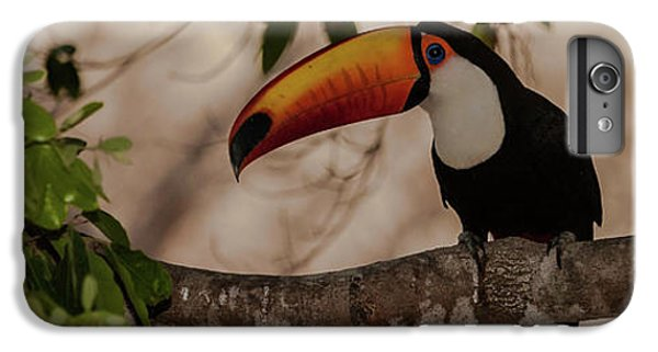 Close-up Of Tocu Toucan Ramphastos Toco IPhone 6 Plus Case by Panoramic Images