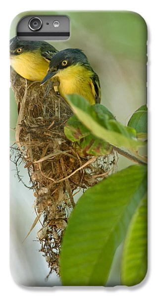 Flycatcher iPhone 6 Plus Case - Close-up Of Two Common Tody-flycatchers by Panoramic Images