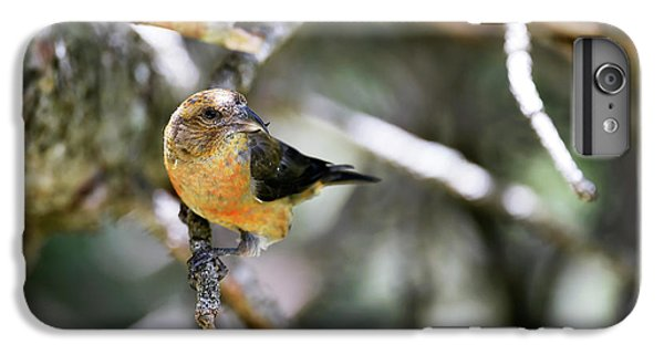 Common Crossbill Female IPhone 6 Plus Case by Dr P. Marazzi