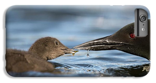 Loon iPhone 6 Plus Case - Common Loon Feeding Chick by Dr P. Marazzi