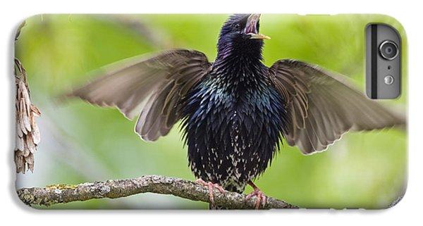 Common Starling Singing Bavaria IPhone 6 Plus Case