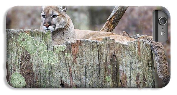 Cougar On A Stump IPhone 6 Plus Case