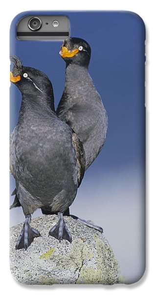 Crested Auklet Pair IPhone 6 Plus Case by Toshiji Fukuda