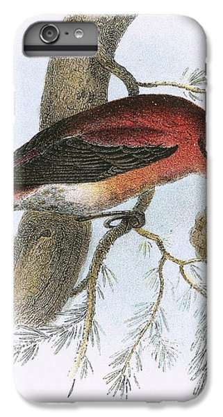 Crossbill IPhone 6 Plus Case by English School