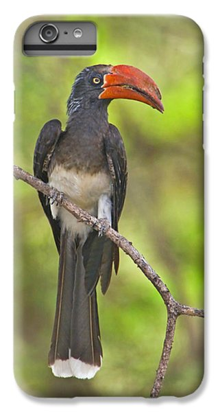 Crowned Hornbill Perching On A Branch IPhone 6 Plus Case