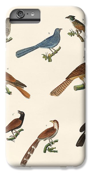 Cuckoos From Various Countries IPhone 6 Plus Case by Splendid Art Prints