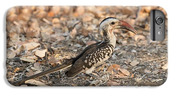 Damara Red-billed Hornbill Foraging IPhone 6 Plus Case by Tony Camacho