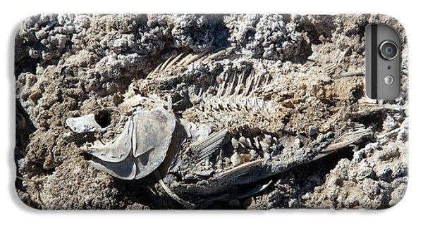 Dead Fish On Salt Flat IPhone 6 Plus Case by Jim West