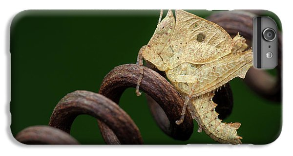 Dead Leaf Grasshopper Nymph IPhone 6 Plus Case