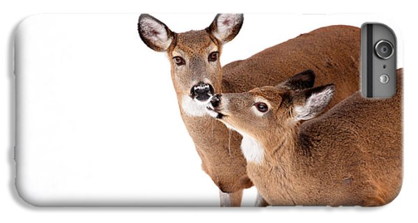 Deer iPhone 6 Plus Case - Deer Kisses by Karol Livote