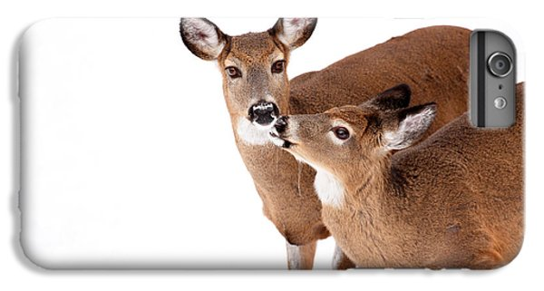 Deer Kisses IPhone 6 Plus Case by Karol Livote