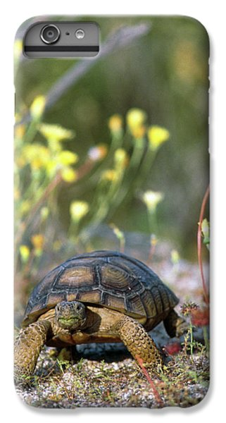 Tortoise iPhone 6 Plus Case - Desert Tortoise (gopherus Agassizii) Walking by William Ervin/science Photo Library