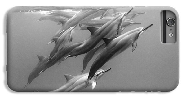 Dolphin Pod IPhone 6 Plus Case by Sean Davey