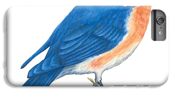 Eastern Bluebird IPhone 6 Plus Case by Anonymous