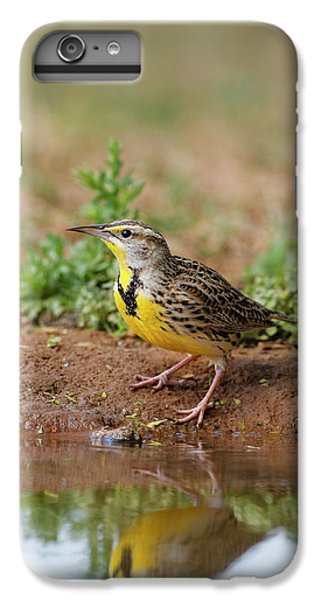 Meadowlark iPhone 6 Plus Case - Eastern Meadowlark (sturnella Magna by Larry Ditto