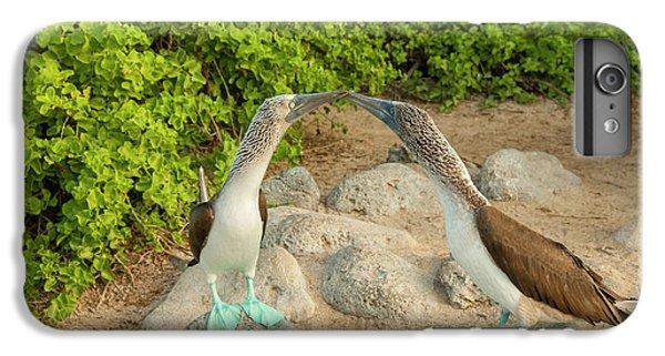 Boobies iPhone 6 Plus Case - Ecuador, Galapagos National Park, San by Jaynes Gallery