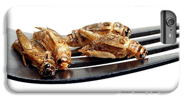 Edible Insects IPhone 6 Plus Case by Victor De Schwanberg