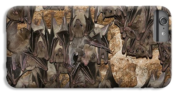 Egyptian Fruit Bat Rousettus Aegyptiacus IPhone 6 Plus Case by Photostock-israel