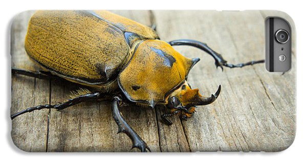 Elephant Beetle IPhone 6 Plus Case by Aged Pixel