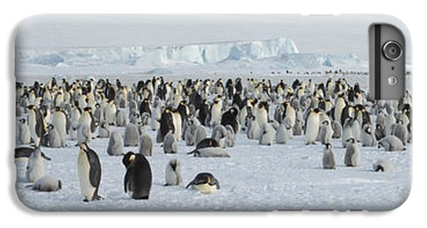 Emperor Penguins Aptenodytes Forsteri IPhone 6 Plus Case by Panoramic Images