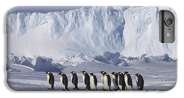 Emperor Penguins Walking Antarctica IPhone 6 Plus Case by Frederique Olivier