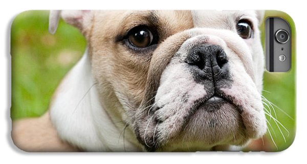 Dog iPhone 6 Plus Case - English Bulldog Puppy by Natalie Kinnear