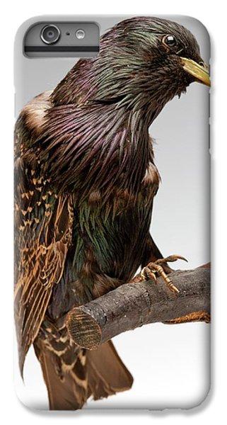 European Starling IPhone 6 Plus Case